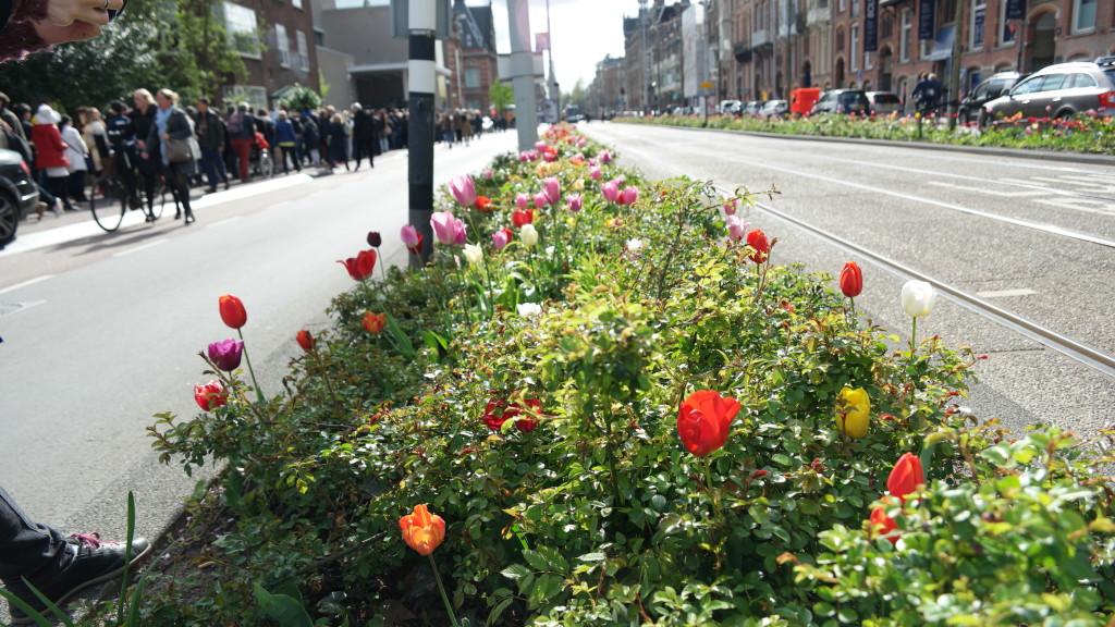 Tulipany w pasie pomiędzy jezdniami.